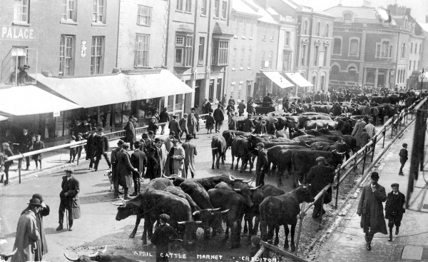 Old postcard showing cattle in a street